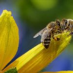 Dreams About Bees – Interpretation and Meaning