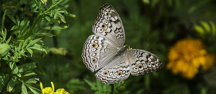 3f3aac0b63d Dreams About Butterflies – Interpretation and Meaning