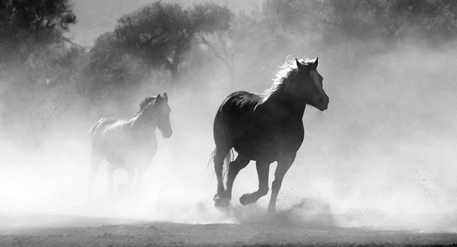 Dreams About Horses Interpretation And Meaning
