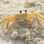 Dreams about Crabs – Interpretation and Meaning