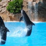Dreams about Dolphins – Interpretation and Meaning