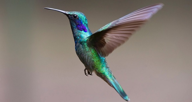 Hummingbird Spirit Animal Symbolism And Meaning