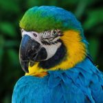 Parrot – Spirit Animal, Symbolism and Meaning
