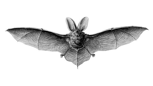 Bat Spirit Animal Symbolism And Meaning