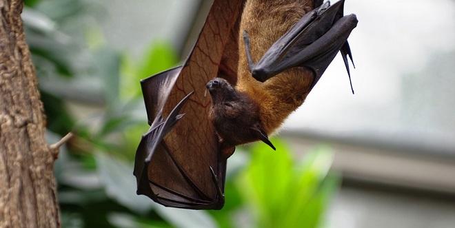 Bat – Spirit Animal, Symbolism and Meaning