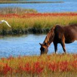 Horse – Spirit Animal, Symbolism and Meaning