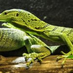 Reptiles – Spirit Animal, Symbolism and Meaning