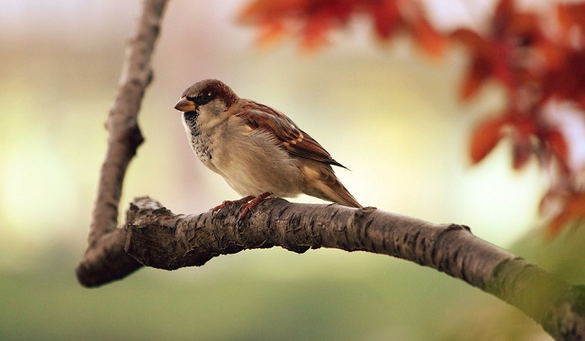Sparrow Spirit Animal Symbolism And Meaning