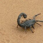 Dreams About Scorpions – Interpretation and Meaning