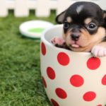 Dreams about Puppies – Interpretation and Meaning