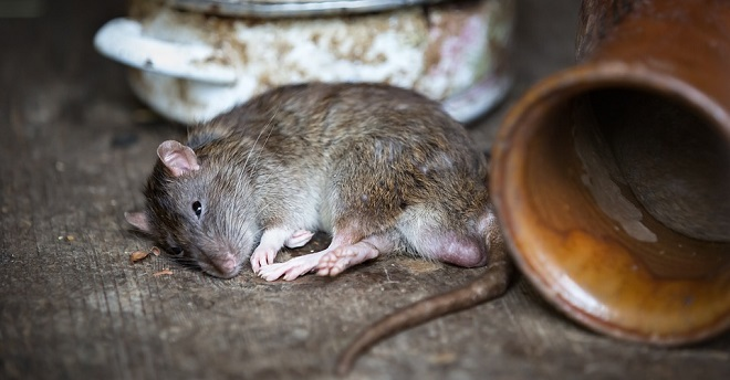 Why dream about killing a mouse