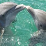 Dolphin – Spirit Animal, Symbolism and Meaning