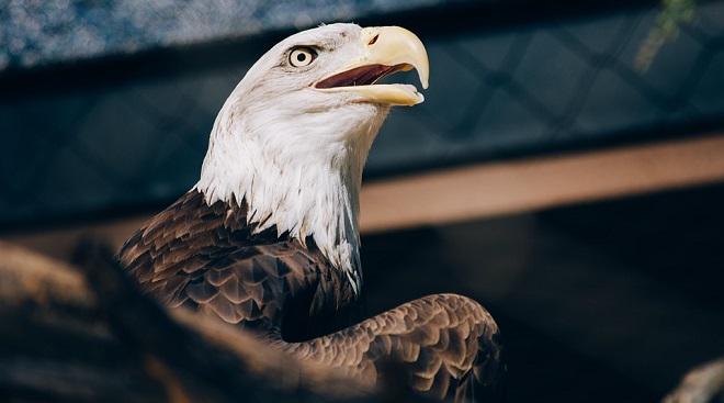 Eagle Spirit Animal Symbolism And Meaning