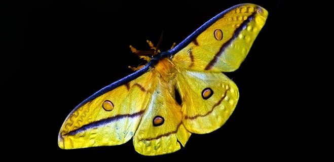 Moth – Spirit Animal, Symbolism and Meaning