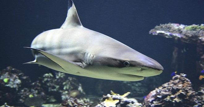 Shark spirit animal symbolism and meaning for Dream interpretation fish