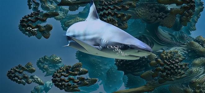 Shark – Spirit Animal, Symbolism and Meaning