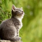 Cat – Spirit Animal, Symbolism and Meaning