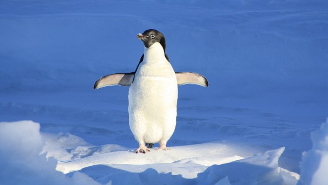 Penguin Spirit Animal Symbolism And Meaning