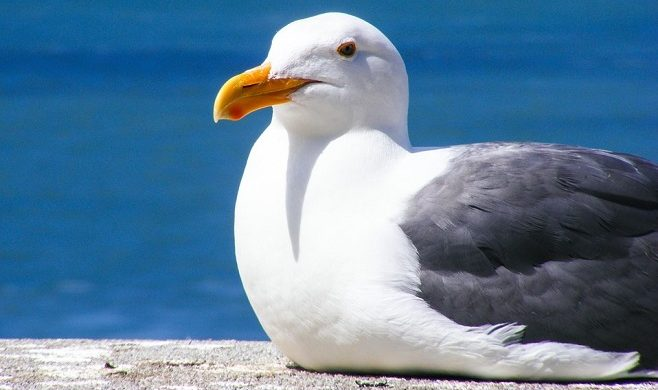 Seagull Spirit Animal Symbolism And Meaning