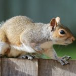 Squirrel – Spirit Animal, Symbolism and Meaning