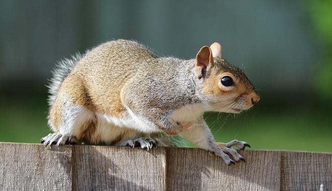 squirrel spirit animal symbolism and meaning