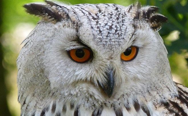 Owl Spirit Animal Symbolism And Meaning
