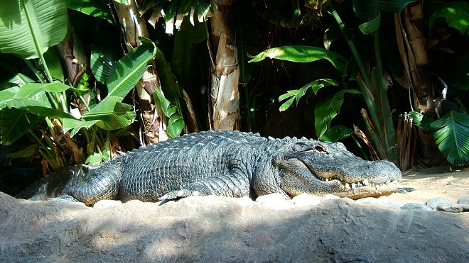 Dreams about Crocodile or Alligator – Interpretation and Meaning
