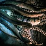 Octopus – Spirit Animal, Symbolism and Meaning