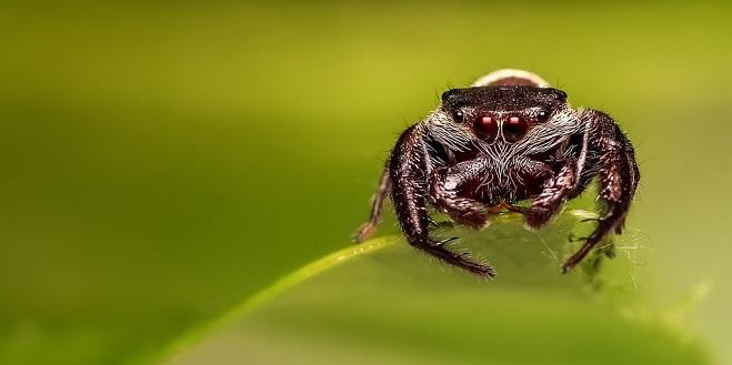 Spider Spirit Animal Symbolism And Meaning