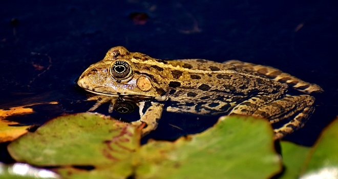 Toad Spirit Animal Symbolism And Meaning