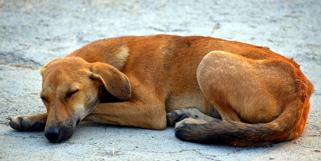 Big Brown Dog Dream Meaning