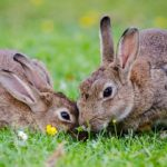 Dreams About Rabbits – Interpretation and Meaning