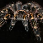 Dreams About Tarantula – Interpretation and Meaning