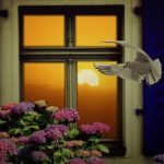 Spiritual Meaning of Birds Hitting Window