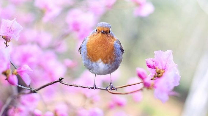 Biblical Meaning of Birds in Dreams – Interpretation and Meaning