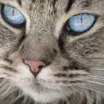 Biblical Meaning of Cats in Dreams – Interpretation and Meaning