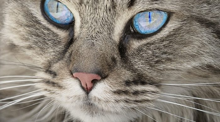 Biblical Meaning Of Cats In Dreams Interpretation And Meaning
