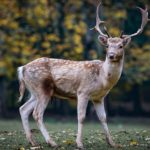 Biblical Meaning of Deer in Dreams – Interpretation and Meaning