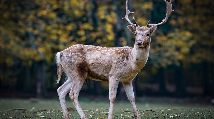 Biblical Meaning Of Deer In Dreams Interpretation And Meaning