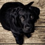Black Dog – Dream Meaning and Symbolism