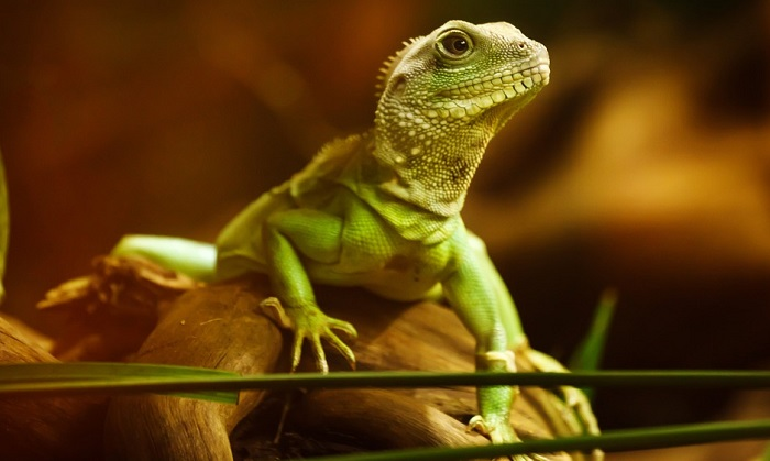 Dreams About Lizards – Interpretation and Meaning
