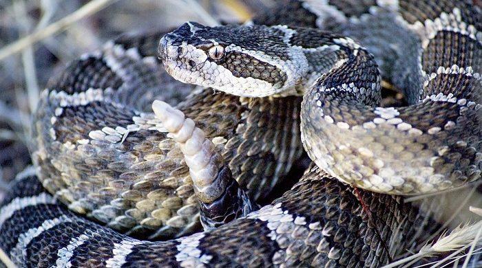 Snake Bite – Dream of Being Bitten by a Snake