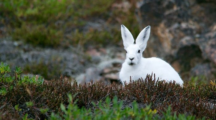 Spiritual Meaning of Rabbit Crossing Your Path