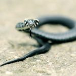 Spiritual Meaning of Snake Crossing Your Path