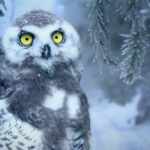 Owl Meaning in the Bible