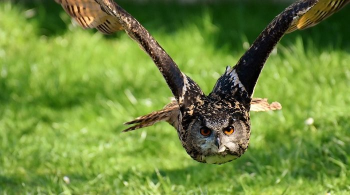 What Does It Mean When An Owl Crosses Your Path
