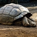 Dream of Tortoise – Meaning and Symbolism
