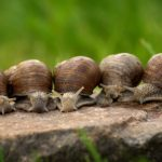 Dreams About Snails – Meaning and Symbolism