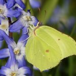 Yellow Butterfly – Meaning and Symbolism
