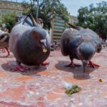 Bird Poop – Good Luck, Superstition